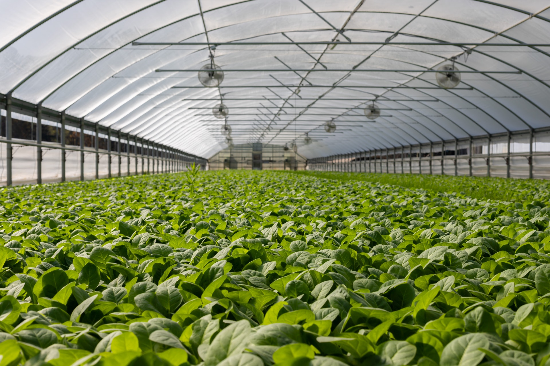 Commercial Greenhouse Prices & Costs Guide